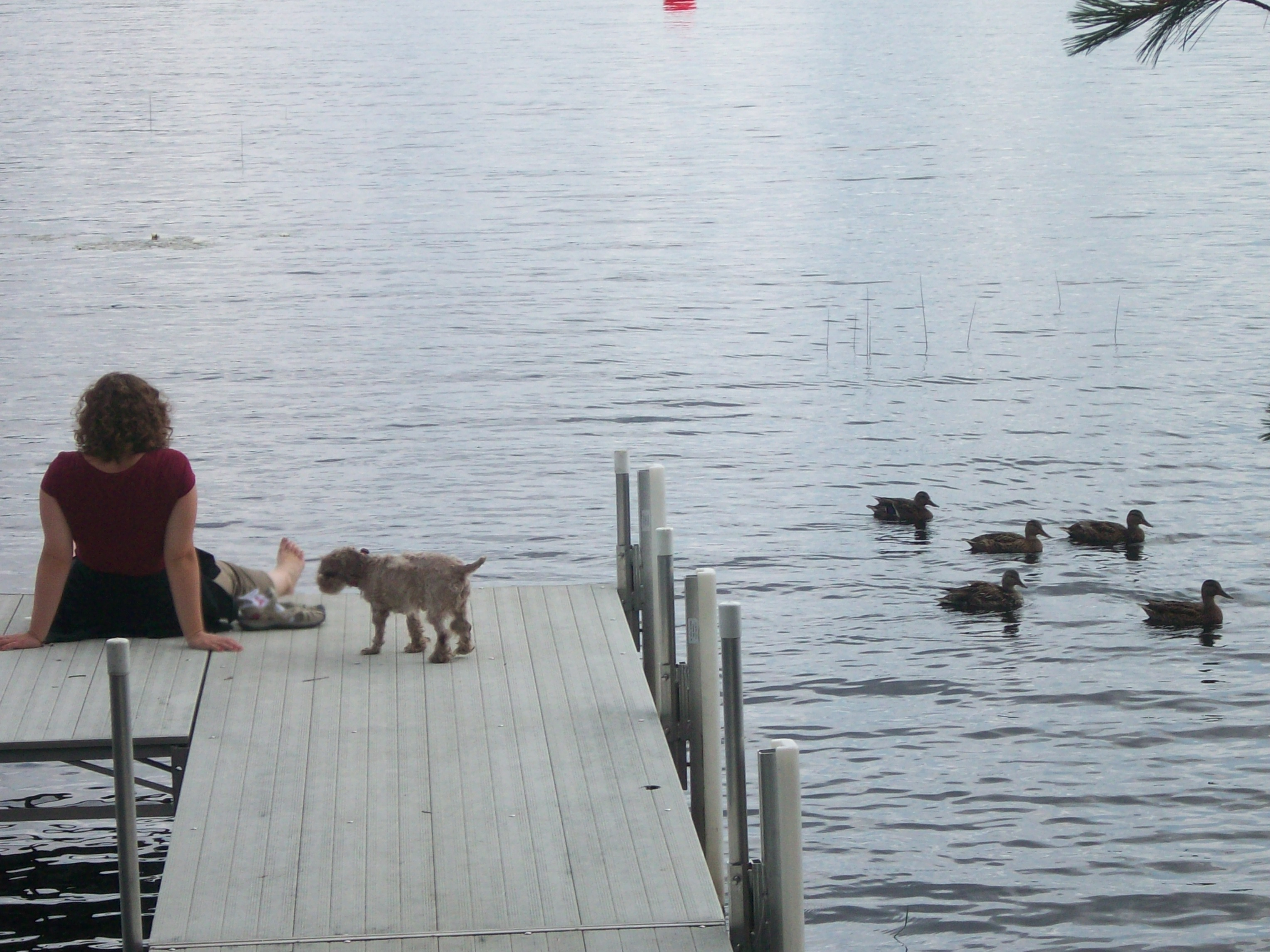 Emma, Dougal, and ducks